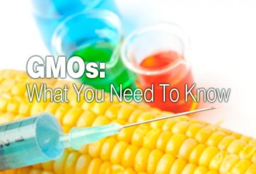 gmos-website3-602x410