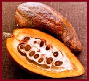3 cocoa bean ws