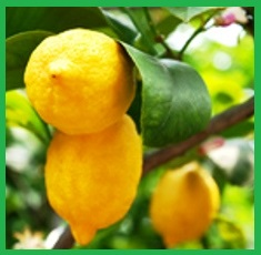 Pure-Lemon-Essential-Oil__72977_1379517532_150_150