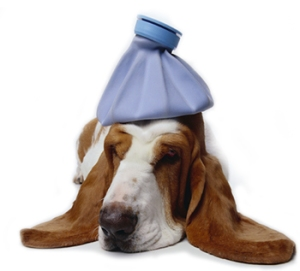 sick-dog3