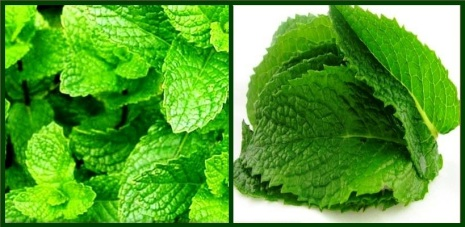 1000-font-b-PEPPERMINT-b-font-MINT-SEEDS-HEALTHY-MEDICINAL-COSMETIC-FRAGRANT-WARM-GREAT-font-b