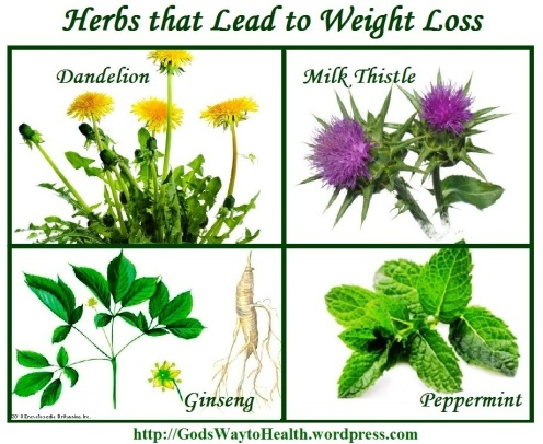 Herbs for weight loss ws