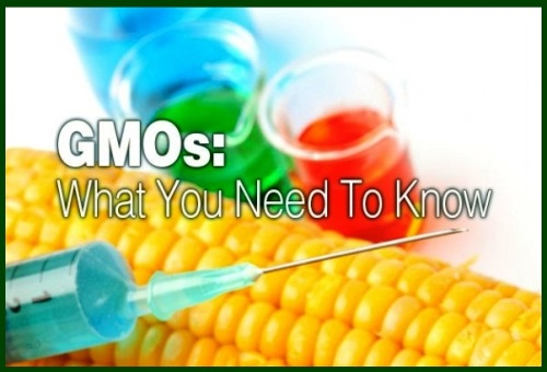 GMO'S WHAT YOU NEED TO KNOW ws