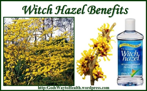 Witch Hazel GWTH