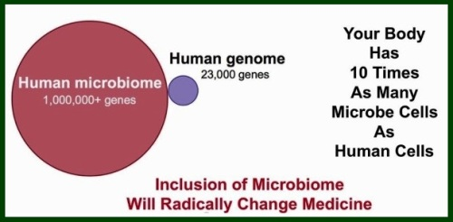 Microbiome-genome-genes-10-times-cells-bacteria-1024x487